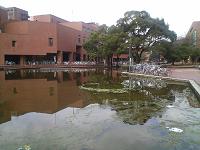 大学の池に発生したアオミドロ