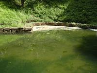 池に大発生したアオコ